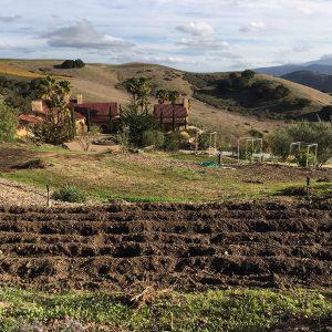 Newly Tilled Soil for Veggies