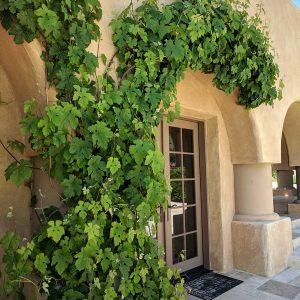 Grapevine Entry