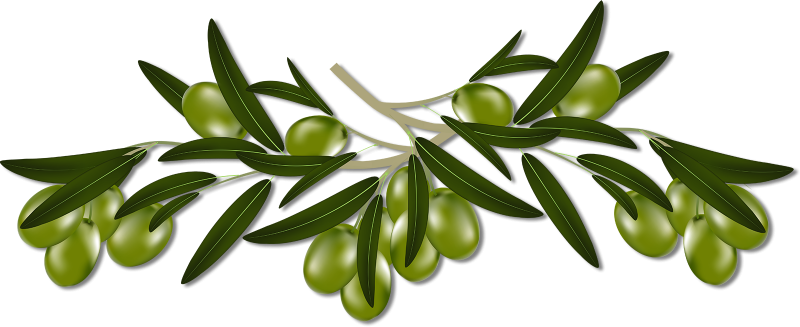 Illustration | Olive Branches