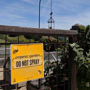 Organic Garden | No Spraying